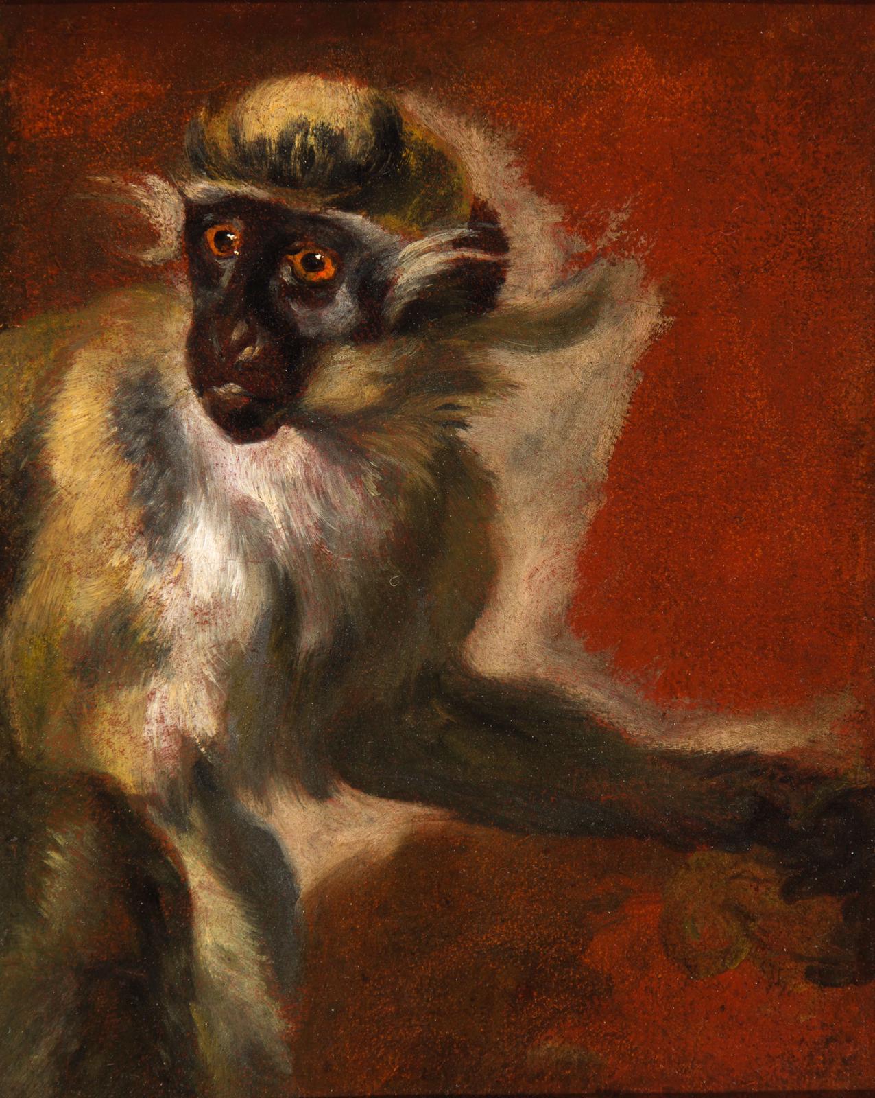 Study of a Vervet Monkey